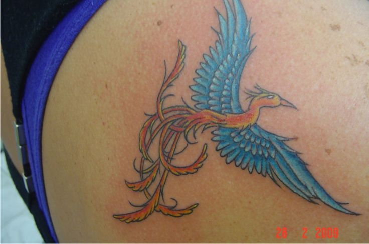 Tatuagem / Fênix / Colorida / Costas / Tattoo / Phoenix / Colorful / Back #studio900 #crismaia