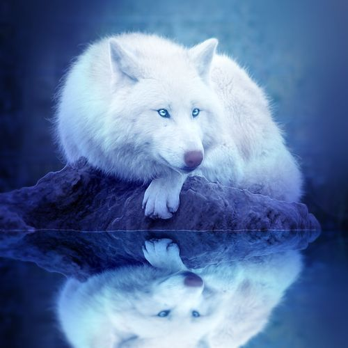 33 best images about white wolves with bright blue eyes on ...