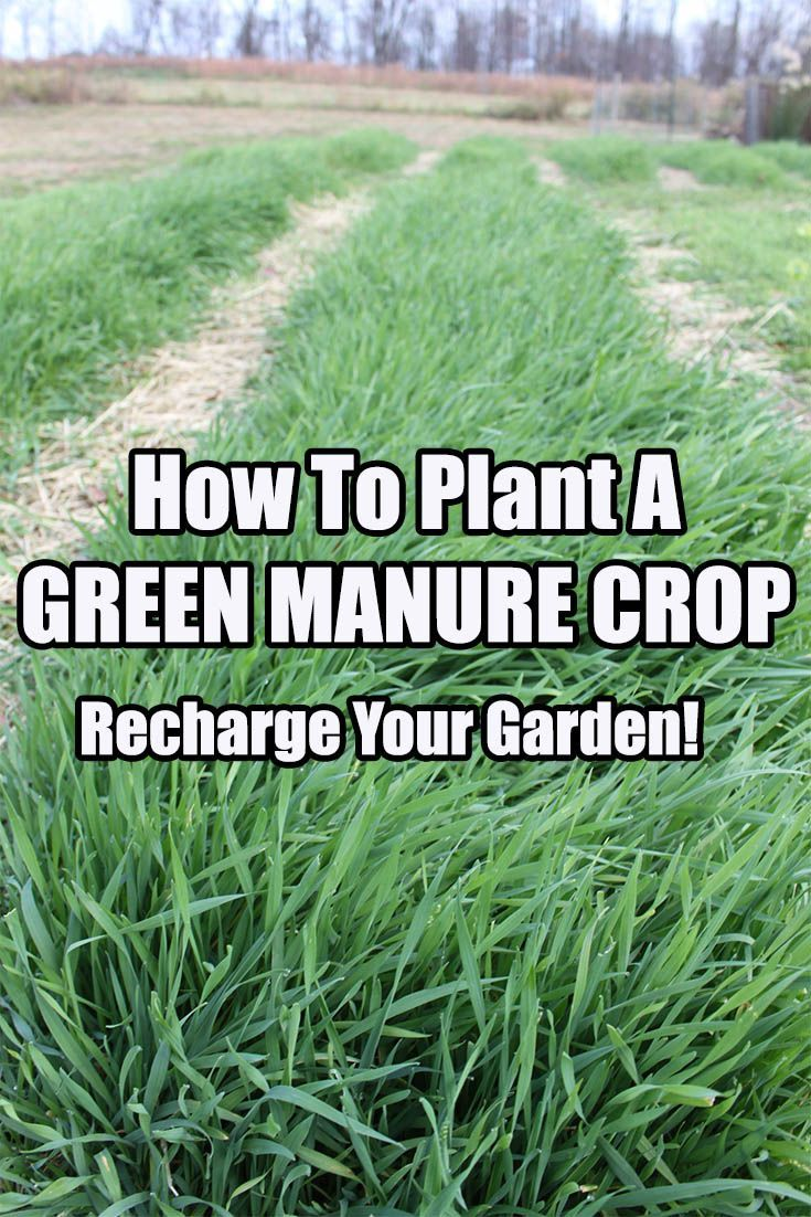 How to plant a green manure crop this spring to recharge your garden