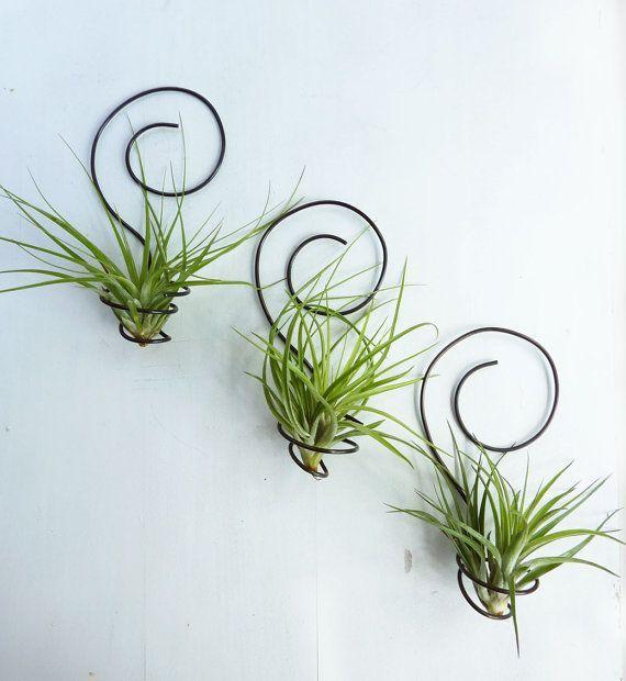Si ya de por si son decorativas estas plantas, ahora puedes rizar el rizo, con estos complementos tan chulos, que harán que tus plantitas luzcan mucho más. Te presentamos varias ideas fáciles, crea…