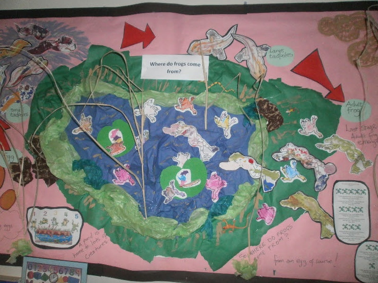 where do frogs come from classroom display photo photo gallery sparklebox