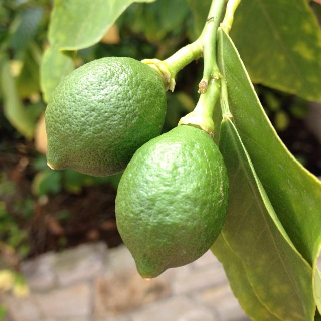 Limes!!!!