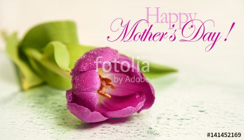 "Download the royalty-free photo ""Mothers day background with tulip flower and Happy mother's day text "" created by stillforstyle at the lowest price on Fotolia.com. Browse our cheap image bank online to find the perfect stock photo for your marketing projects!"