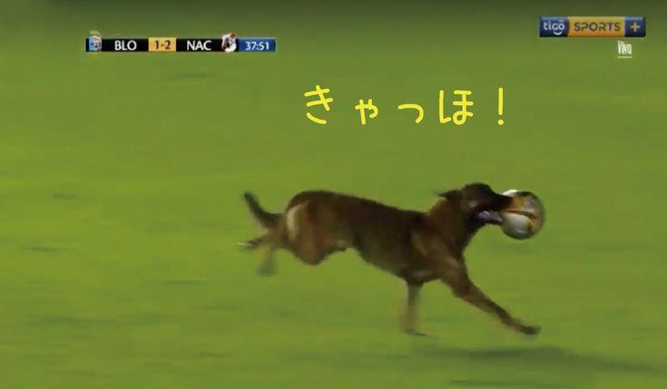 警察犬サッカーの試合を妨害人間がボールを独占したことに憤慨か