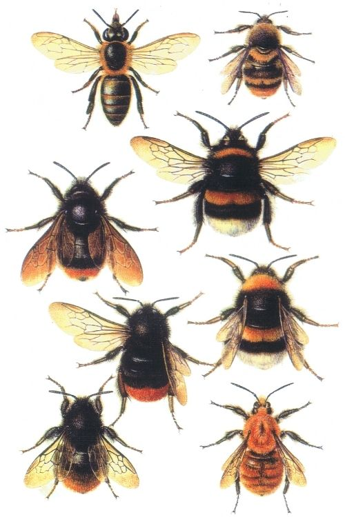 Decopage Bee Print