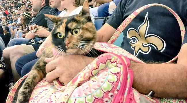 WHO CAT: Someone Brought A Cat To The Saints Game Thursday Night, Blowing Everyone's Mind