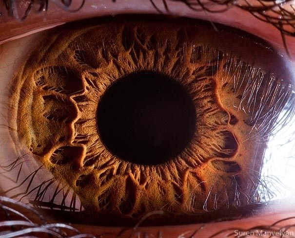 And finally, this is what the human eye looks like up close: