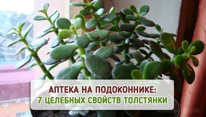Это растение есть в доме каждого. Узнай о его 7 лечебных свойствах!