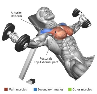 CHEST - INCLINE DUMBBELL FLYES                                                                                                                                                      Plus
