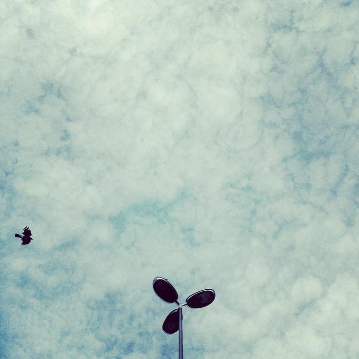 #bird #clouds #bluesky