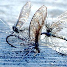 "87 Likes, 1 Comments - Chris Williams (@cegwilli) on Instagram: ""Callibaetis ready for morning action! #flytying #flyfishing #flytyingjunkie #otzinger #mayfly…"""