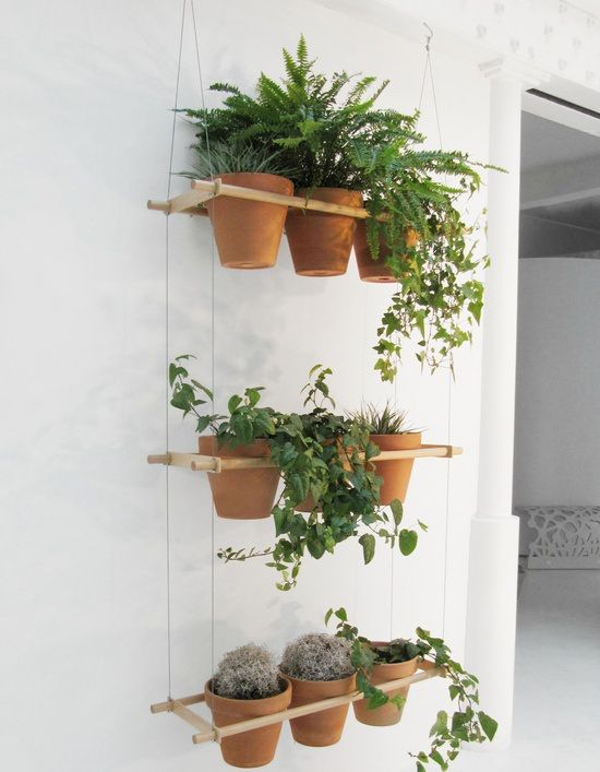 13 best images about plant divider on pinterest