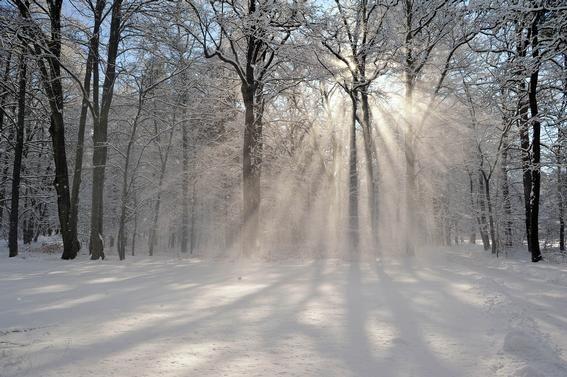 Winter im Branitzer Park