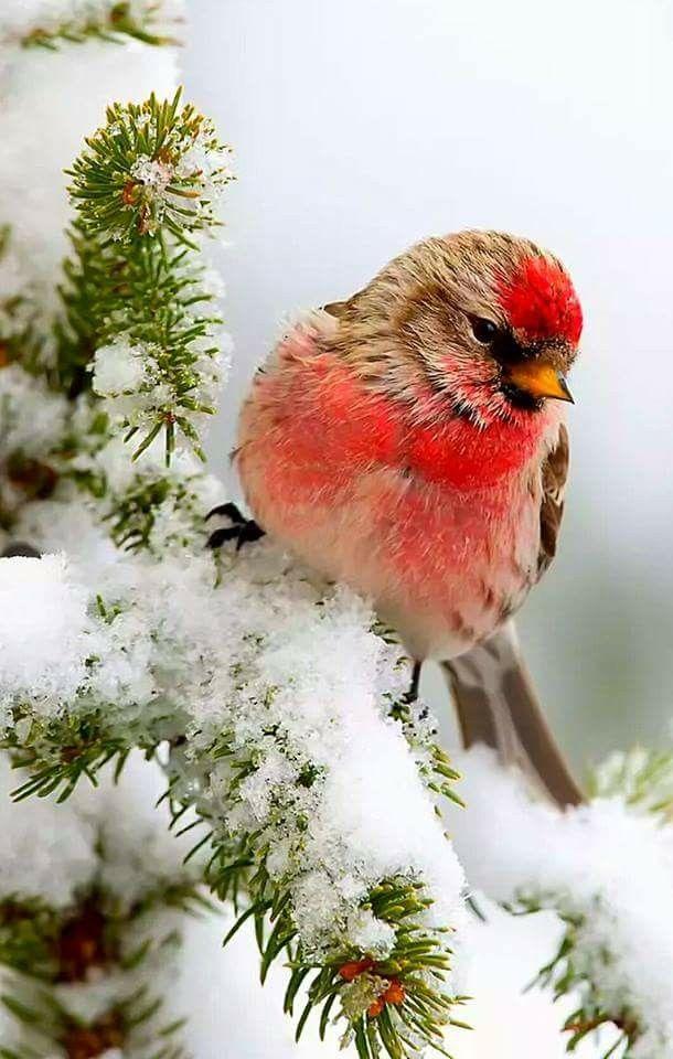A beautiful bird on a snowy branch