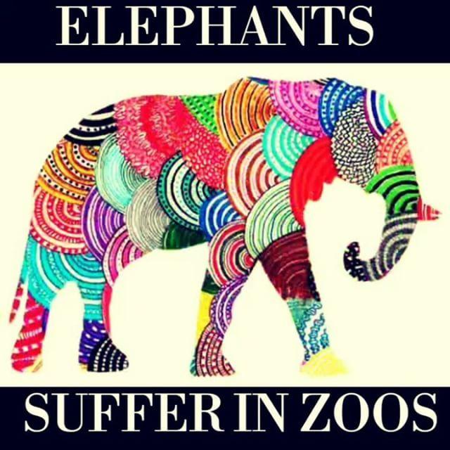 🚩 International Day of Action for Elephants in Zoos. «Слоны не созданы для жизни в неволе, в маленьких городских зоопарках, где они ежедневно мучаются. Ни один здравомыслящий человек не считает, будто вольеры зоопарка обеспечивают пространство, достаточное для этих гигантов. Пришло время прекратить пагубную практику содержания слонов в зоопарках». 🚩 #elephant #suffering #zoos #idaez #free #слон #зоопарки #мучения #свобода #спасти #save #animallove #животные