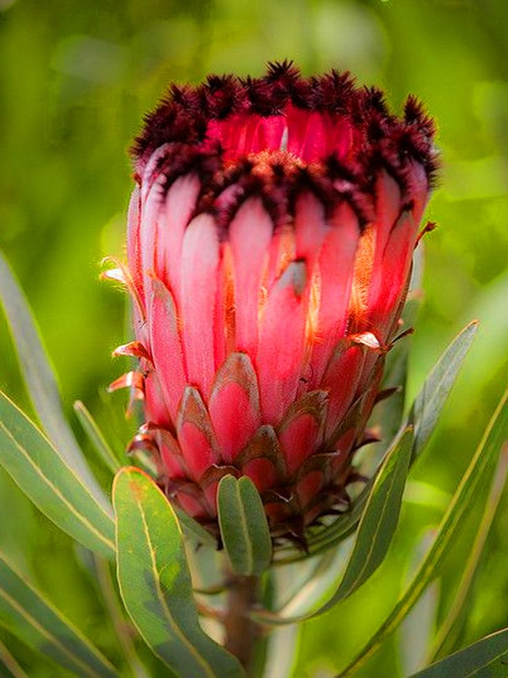 Image result for african flowers photos
