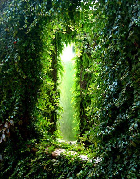 Leafy green tunnel. Secret Garden