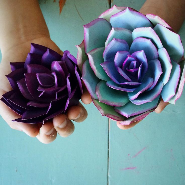 Paper succulents. #paperflowers