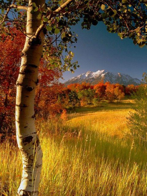 Golden season (no location given). Photo: Deeb Young