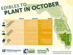 Edible food vegetable plants to start in October in North, Central and South Florida - fall gardening
