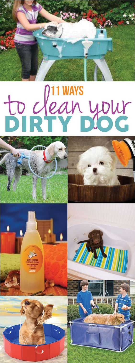 108 best pet sitting business images on pinterest pet sitting diy dry shampoo for dogs solutioingenieria Images