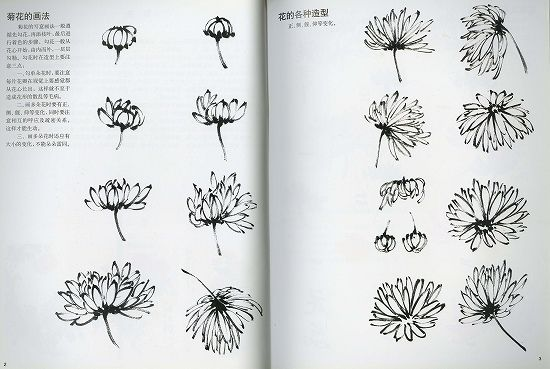 sumi-e 菊花の描き方と見本