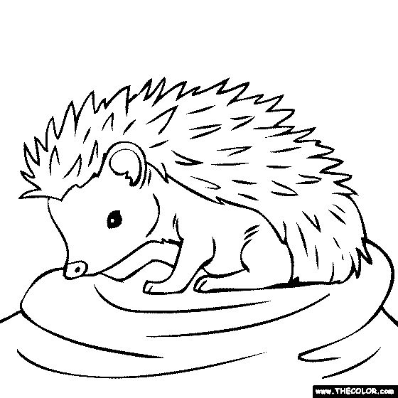 free hedgehog coloring pages - baby hedgehog coloring page great idea pinterest