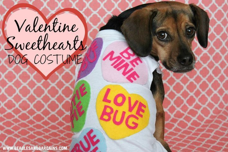 Diy Valentine Sweethearts Costume For Dogs Valentines Day Dog