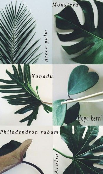 Monstera, Areca Plam, Xanadu….