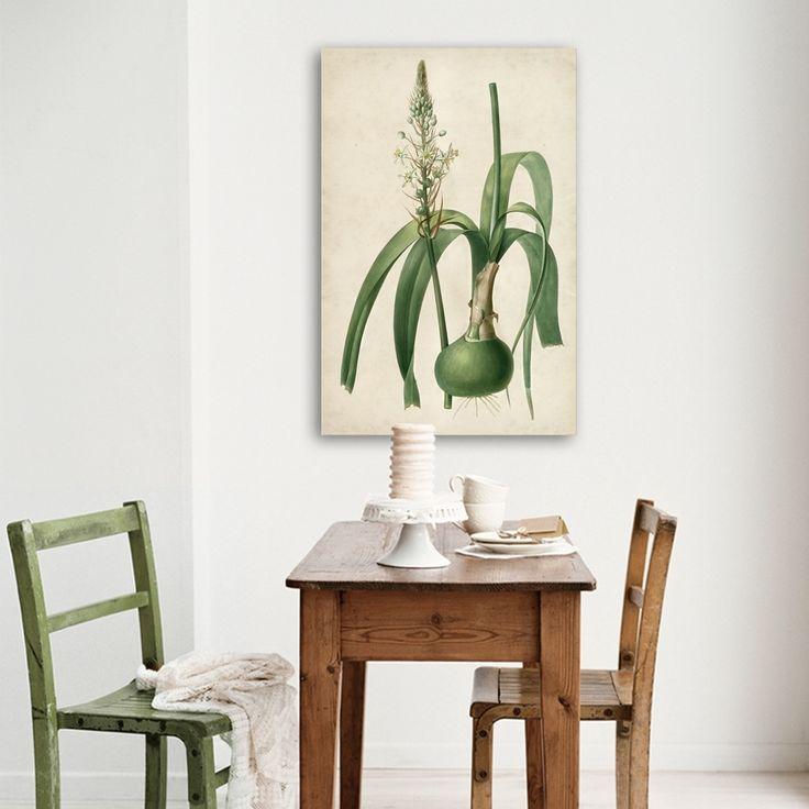 CEBULA INDYJSKA MIXGALLERY vintage,onion,wallart,canvas,canvas print,home decor, wall,framed prints,framed canvas,artwork,art