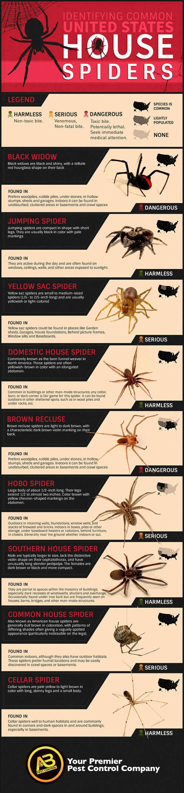 How To Identify Common Poisonous Spiders In Your Home