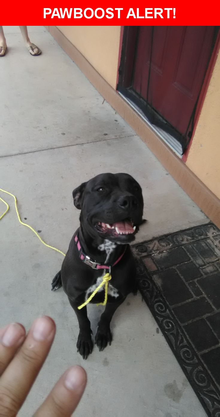 Is this your lost pet? Found in Colorado Springs, CO 80909. Please spread the word so we can find the owner!  Female pitbull dark in color. Brown or black. White markings on chest. Pink collar, no tags, no chip. Age unknown. Probably about a year. Has had pups. Very good temperament.  Near de Cortez St & Tia Juana St