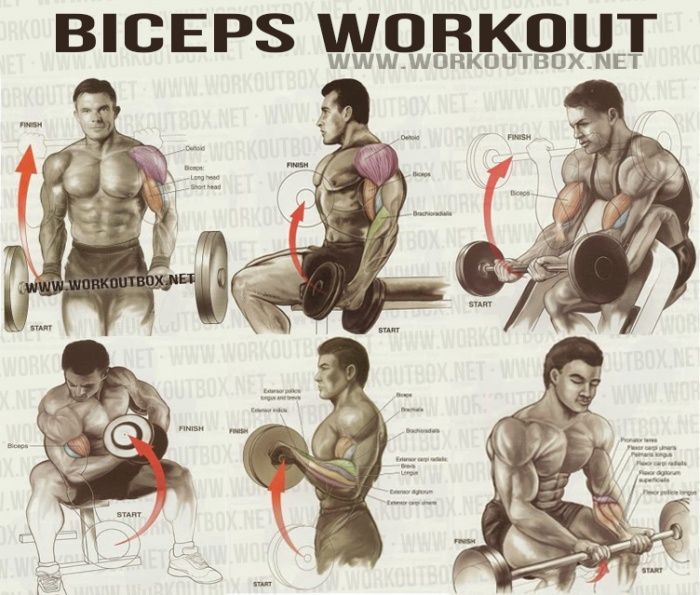 Biceps Workout - Healthy Fitness Workout Sixpack Back Calves - FITNESS HASHTAG