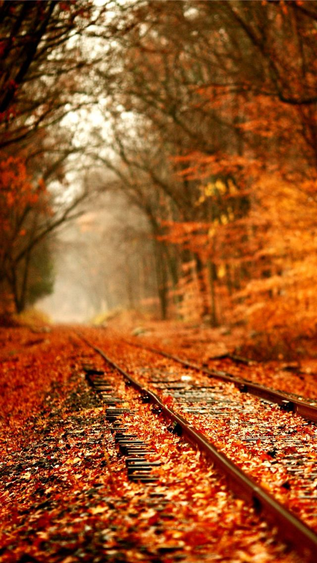 The orange sparks optimism and brings a warmth to the dull railway track and dying trees.