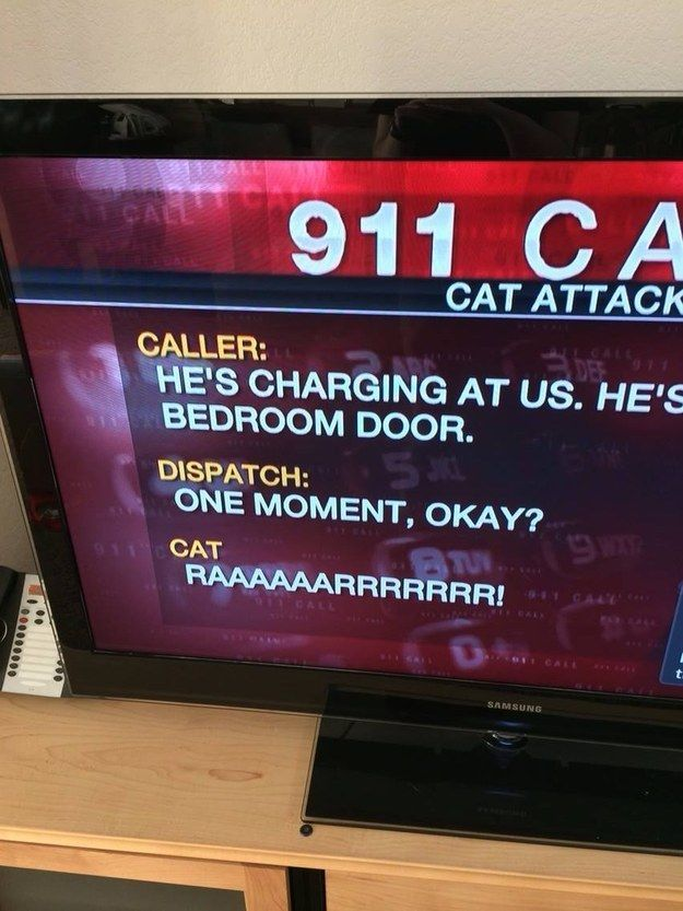 And entertain us with important 911 calls. | 27 Reasons You Should Watch The Local News More Often
