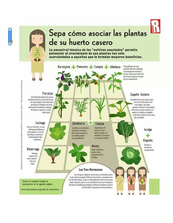cómo organizar tu huerto agrupando las plantas correctas...