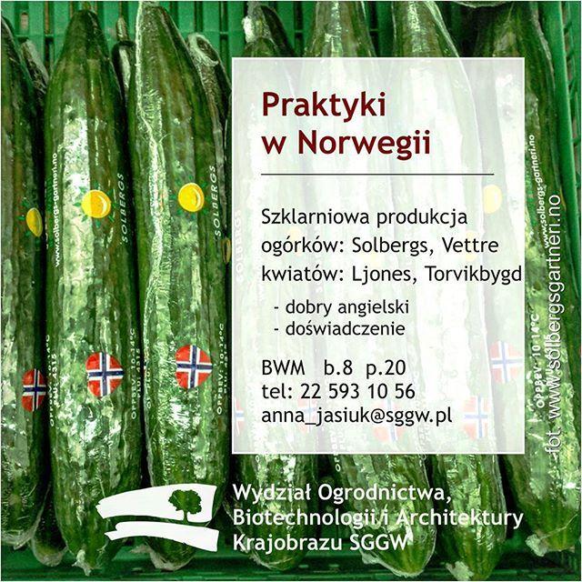 #Praktyki w #Norwegia szklarniowa #produkcja - 🌱 #ogórki: #Solbergs w #Vettre 🌸 kwiaty: #Ljones w #Torvikbygd - dobry angielski - mile widziane doświadczenie tel: 22 593 10 56 #WOBiAK #SGGW