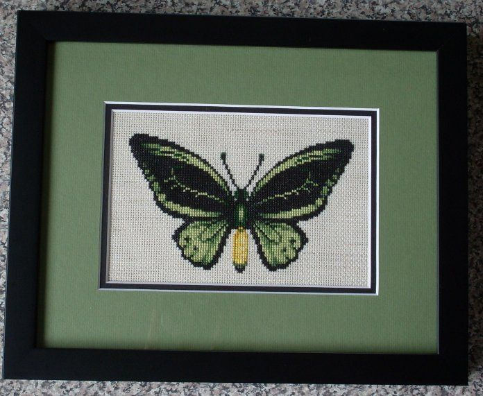 Cairn's Birdwing Butterfly by SmiteTheeWithApples.deviantart.com on @deviantART