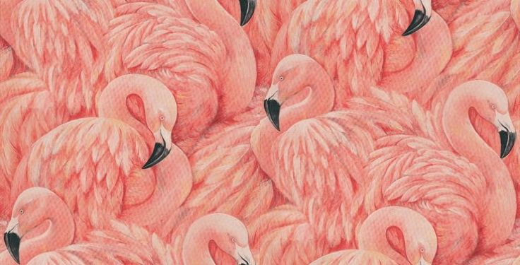 Flamingos  - Albany Wallpapers - A raised textured vinyl wallcovering featuring extravagant pink flamingos. Showing in shades of pink, peach and black.
