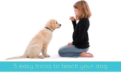 how to teach dog bang trick