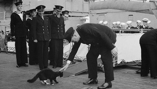Blackie - ship cat on HMS Prince of Wales...later renamed Churchill