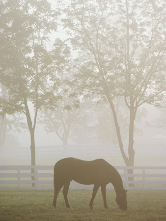 Geld Crop, Parks Photographers, Thoroughbred Geld, Horses Parks, Hors Parks, Kentucky Horses, Lexington Kentucky, Photographers Prints, Raymond Gehman
