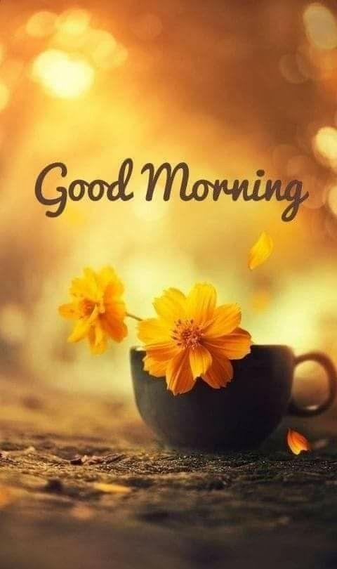 Pin By Brandi On Mrninggreetings Good Morning