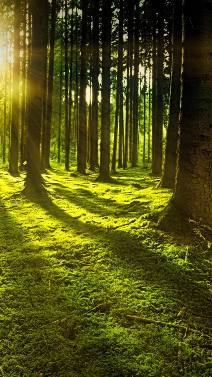 Landscape Sunbeams Tree Forest Nature 720x1280 Wallpaper Forest Pictures Nature Forest Photography