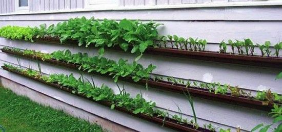 Recycled guttering for space saving food gardening