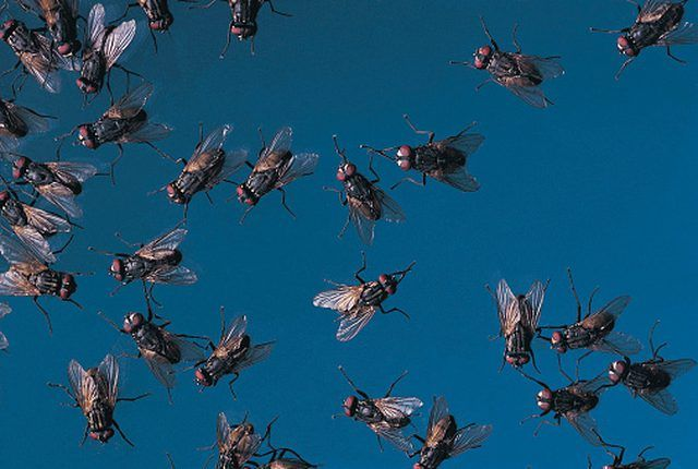 How to Get Rid of Bugs and Midges in the Yard   Hunker ...