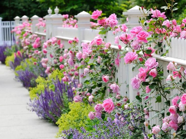 Heavenly Picket Fence