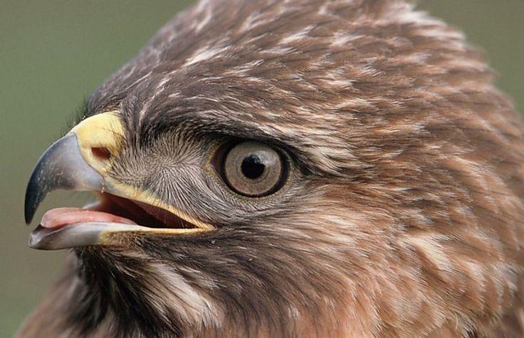 De roofvogel, een documentaire over roofvogels 52 minuten durende documentaire over roofvogels, verschillende soorten worden hier besproken Een zeer mooie en zeer professioneel gemaakte video die verschillende soorten roofvogels duidelijk …