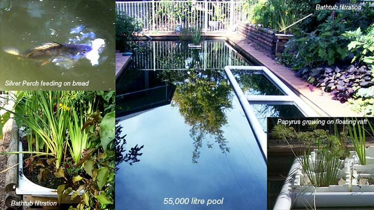 18 best convert pool images on pinterest gardening - Swimming pool to fish pond conversion ...