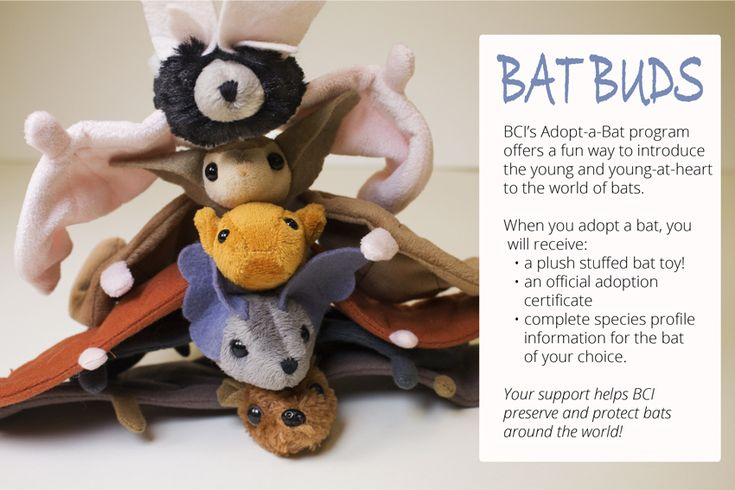 Adopt-a-Bat -  a great way to introduce the young and young-at- heart to bat conservation. From Bat Conservation International